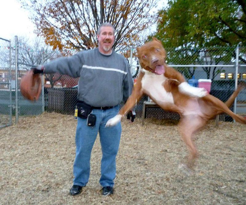Фото прикол выражение лица, питомец, собака и хозяин, фото с животным