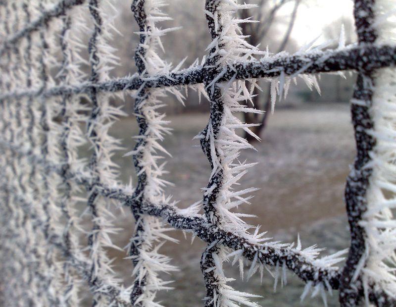 Новые фото забор, красиво, красота природы, обледенел