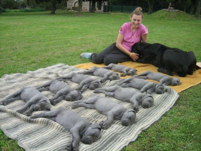 Фотоприкол фото новорожденные, потомство, родила, щенки