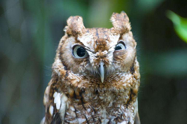 Бесплатный фотоприкол выражение лица, птица, сова, совенок