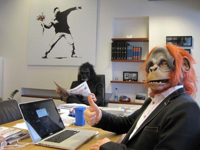 Прекрасные фото маски, на работе, обезьяны, офис, прикол, юмор
