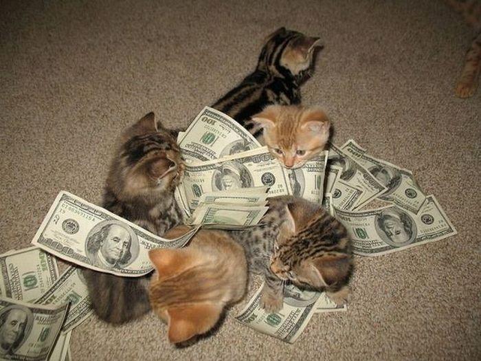 Фото прикол банкноты, деньги, доллары, животные, котята