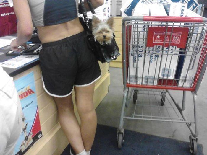 Фотоприкол недели выражение лица, магазин, собака в сумке, собачка, супермаркет
