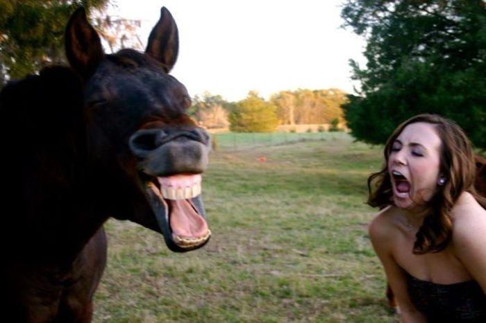 Красивые фото выражение лица, девушка, лошадь, прикол