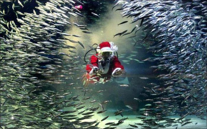 Смешной фотоприкол в воде, дед мороз, картинка, косяк рыбы, прикольная фотка, санта клаус