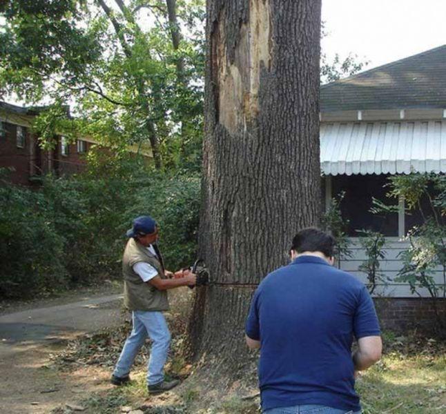 валить дерево, спилить дерево, спилили, бензопила