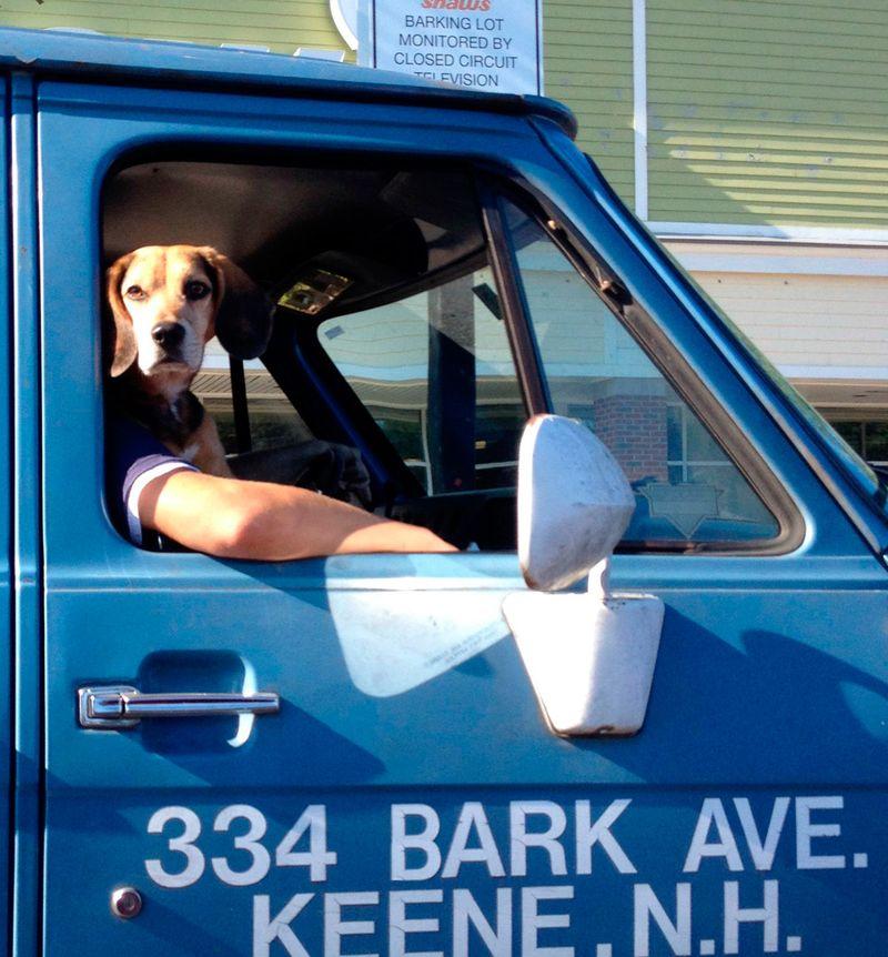 Юмор прикол выражение лица, как человек, прикол, собака в машине, собака за рулем