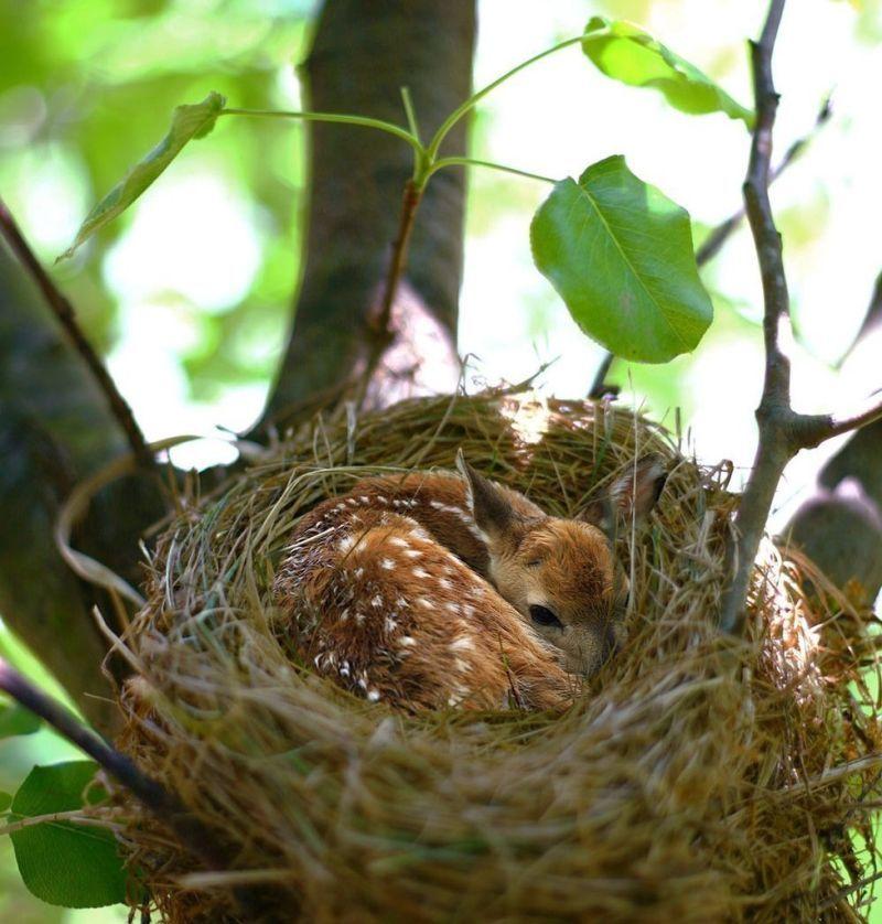 Смешной фотоприкол гнездо, милаха, на дереве, олененок, прикол