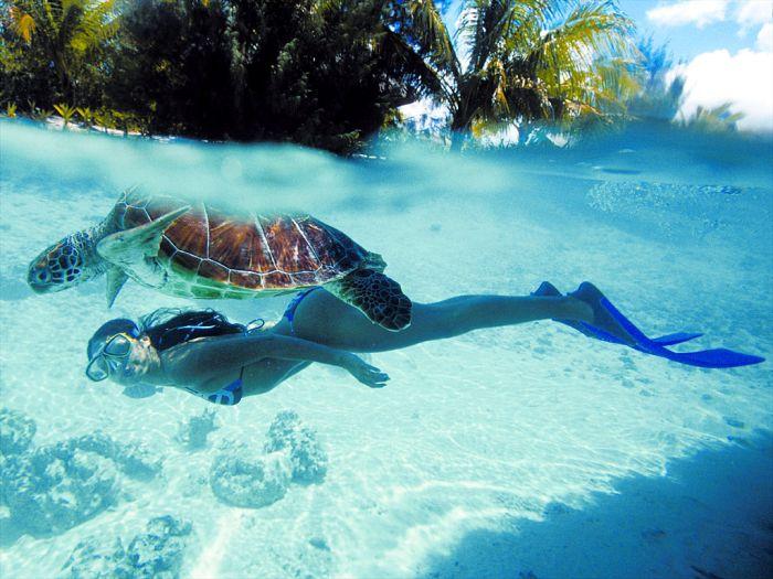 Фотография голубая лагуна, красивая девушка, красота природы, черепаха, чистая вода