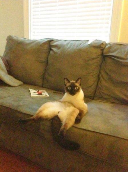 Прикольные фото как человек, на диване, прикольный кот, сидит