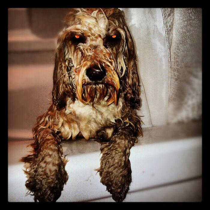Бесплатный фотоприкол выражение лица, глаза, злость, как человек, мокрая, ненависть, собака