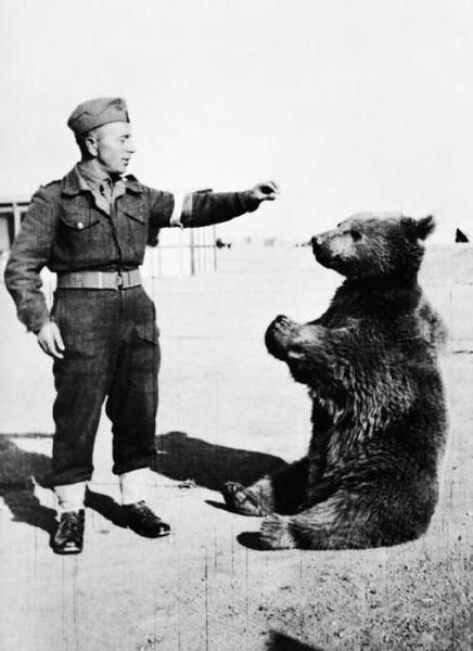 война, медведь, войтек, солдаты