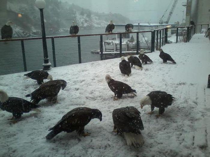 Фото онлайн голуби, мороз, птицы, снег, холод