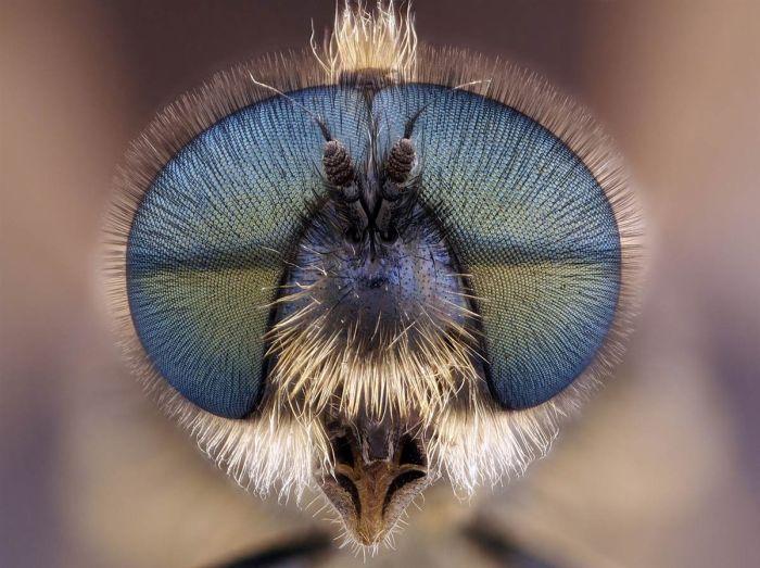 Прикол картинка глаза, красивая фотография, круто, макросъёмка, муха, насекомое