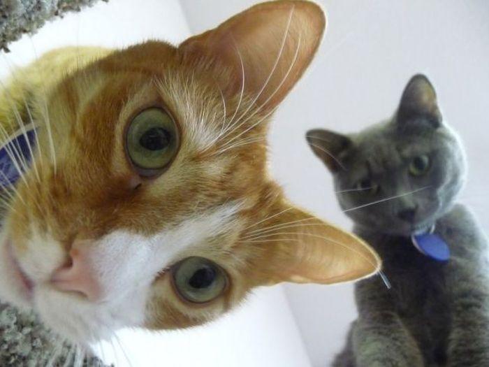 Фотоприкол фото выражение лица, животные, котейки, кошки