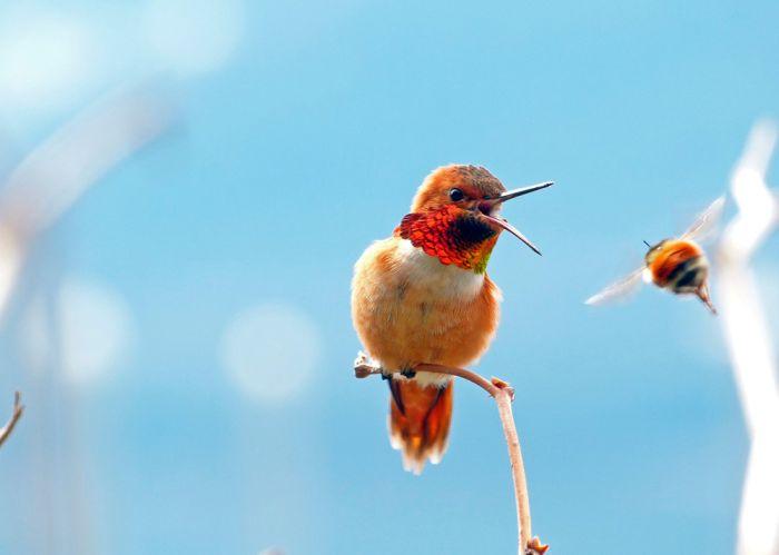 Бугагашеньки красивая птица, природа, птичка, разноцветная