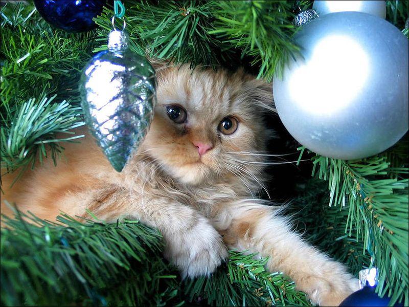 центральном новогодние фотографии с кошками больше так