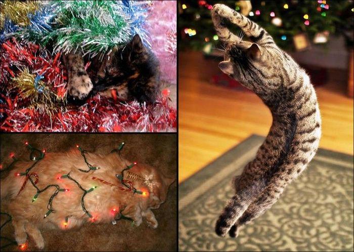 домашние питомцы, елка, кошки, новый год