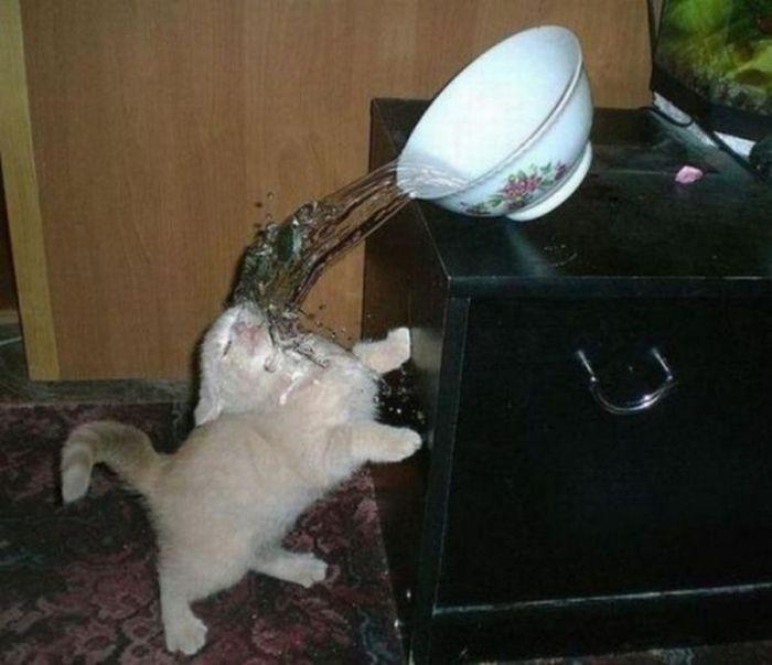 Снимки домашних котов, сделанные в нужный момент (24 фото)