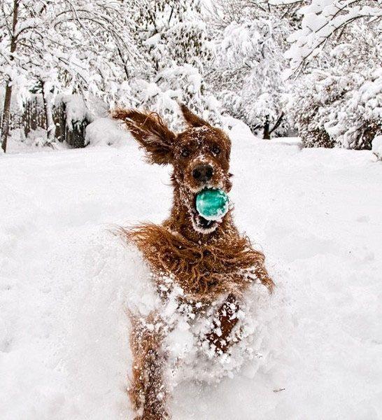 Забавные животные и снег (18 фото)