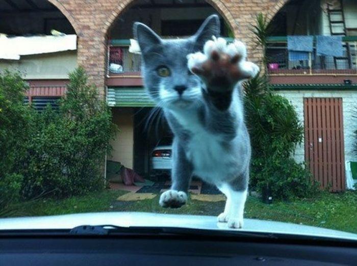 Фотоальбом котенок, лобовое стекло, милашка, милое создание, прикольная фотографи