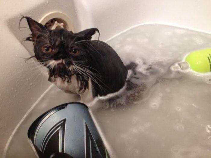 Прекрасные фото бедняга, безысходность, ванная, котейка, обречен, печаль, тоска, ужас