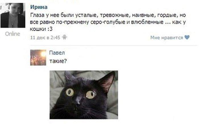 Новый фотоприкол вконтакте, глаза, картинка, комментарий, кошка, прикол, статус