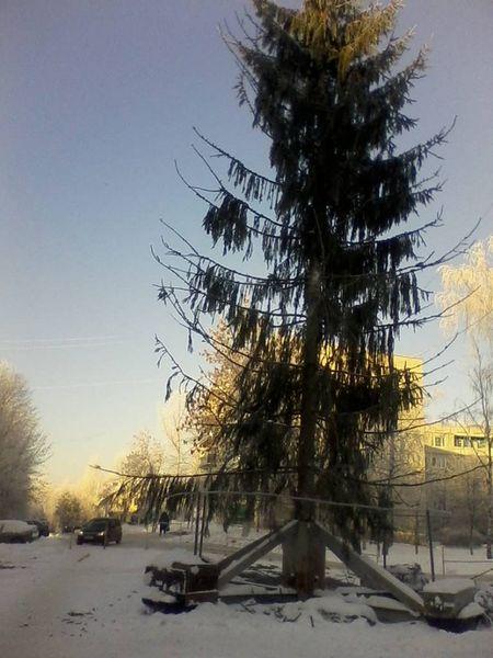 елка, торжок, ель, новый год