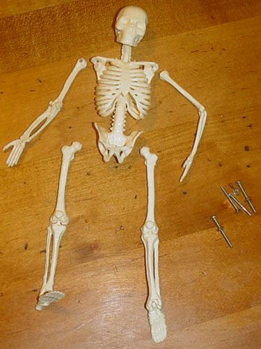 Намазываем скелет толстым