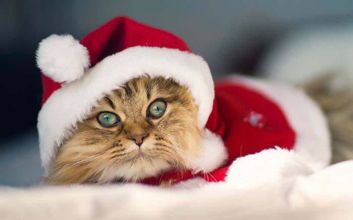 Бугагашеньки котейка, котенок, милашка, новогодний костюм