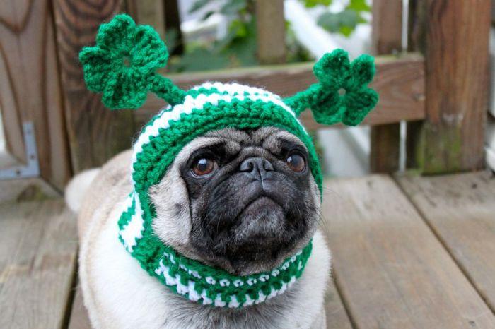 Фотоприкол онлайн бесплатно выражение лица, костюм, нарядил пса, собаку переодели, собачка, шапочка