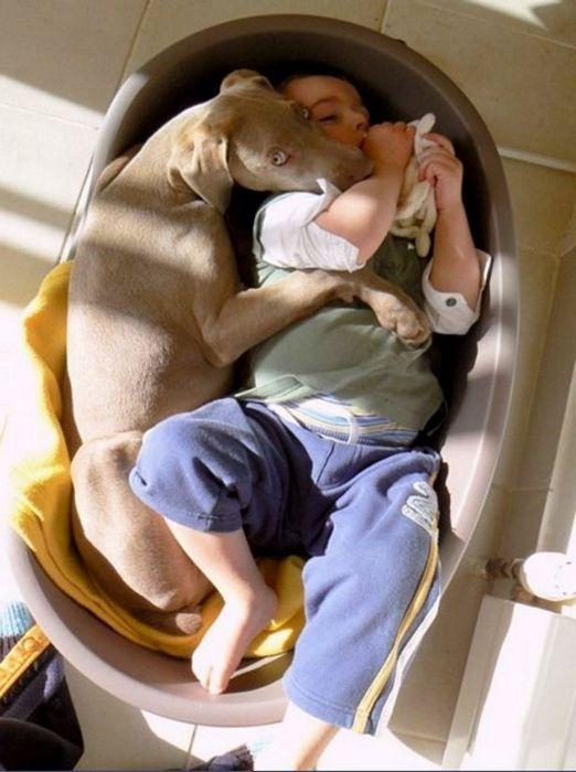 Фото милое создание, прикол, ребенок с собакой, ребенок спит, спит, фотография