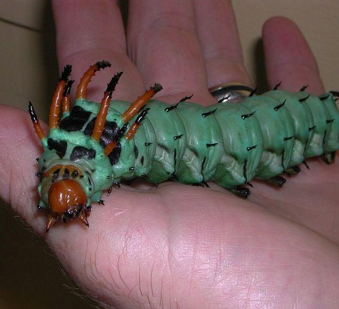 Прикольные фото гусеница, животное, прикольная, фотка, фотография, экзотическая