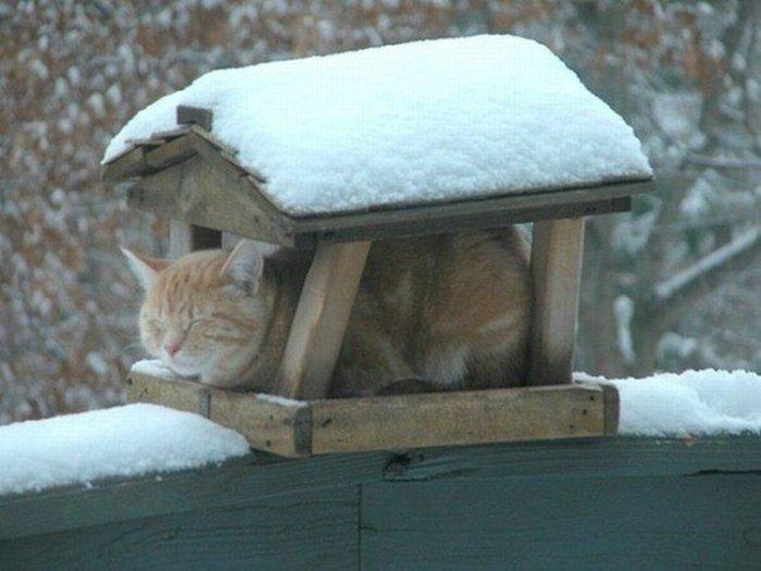 Новый фотоприкол выражение лица, замерз, зима, кот, котейка, милаха, скворечник, холодно