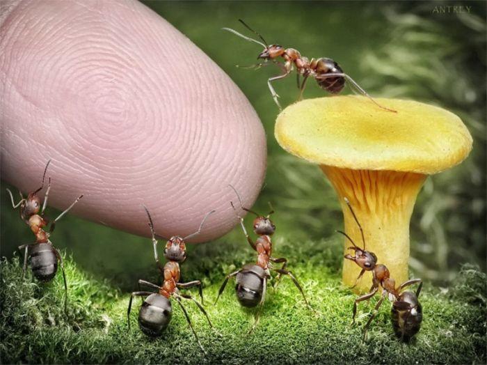 Прикол картинка гриб, красивая фотография, крутая фотка, макросъёмка, муравьи, насекомые