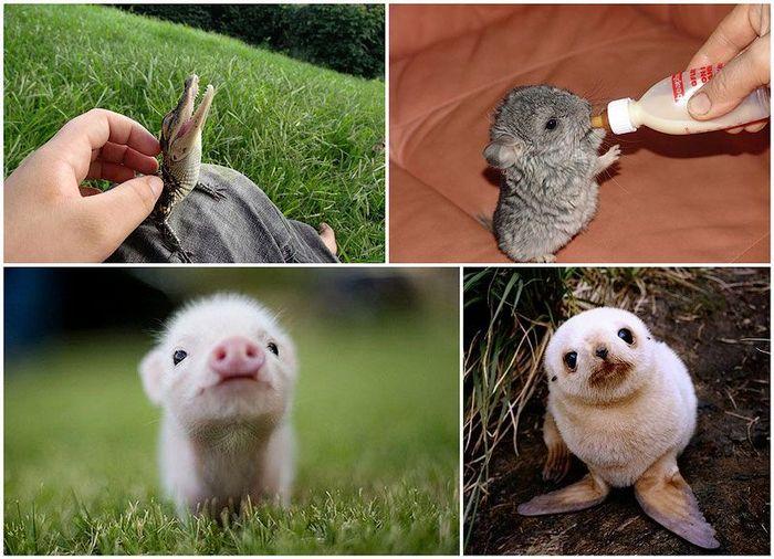 детенышь, зоопарк, малыши, животные, дикая природа, рождение