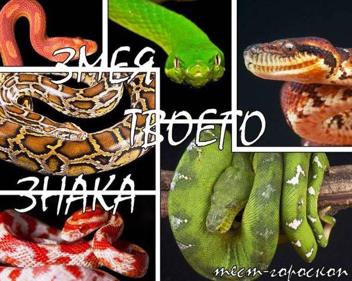 змея, гороскоп, новый год