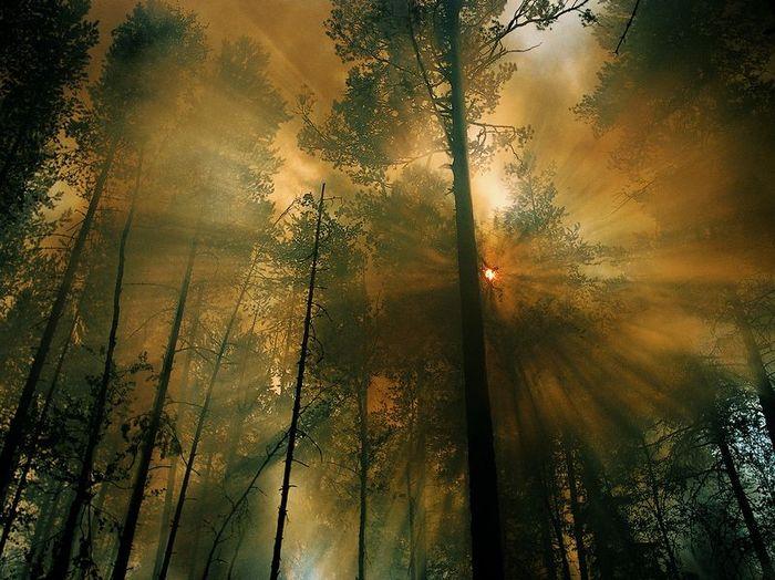 Картинки самые лучшие картинки природы