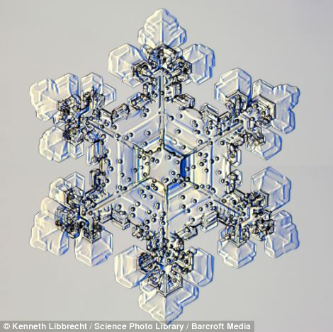 снежинка, под микроскопом, профессор