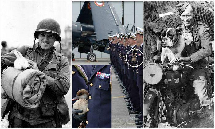 афганистан, великая отечественная, военные, вторая мировая, вьетнам, первая мировая, питомцы, собаки