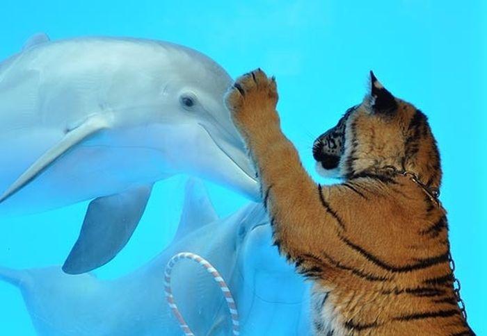тигр, дельфин, пингвин