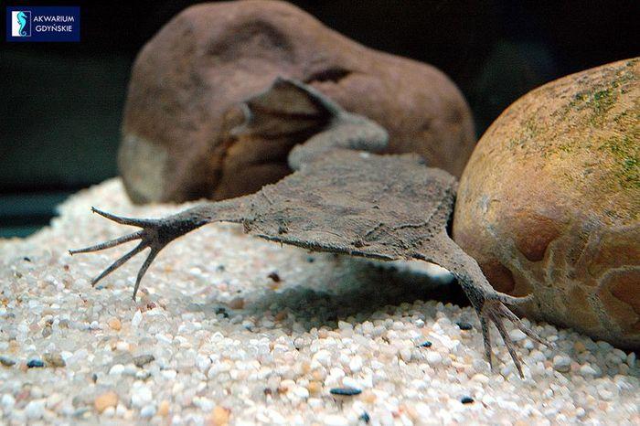 жаба, лягушка